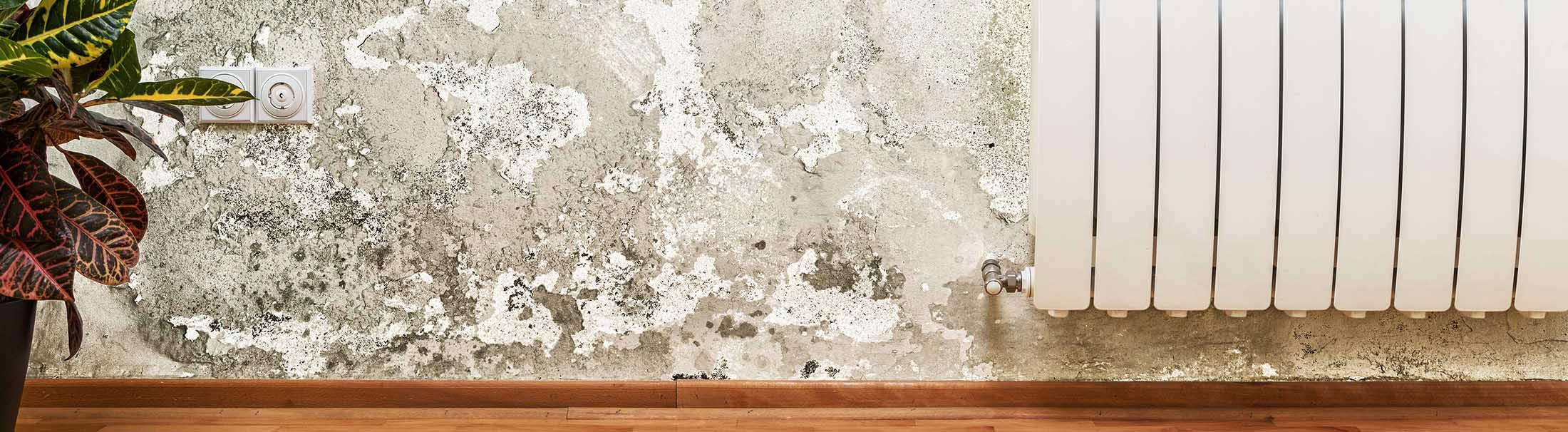 Home Inspection Moisture Damage